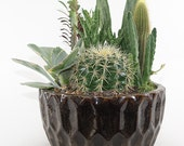 "Medium Cactus Garden - 8"" Earth Tone Ceramic Container - Perfect Table Setting, Centerpiece, Gift"