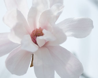 Magnolia Photography No. 5  -- Limited editions in various sizes by Hazel Berger