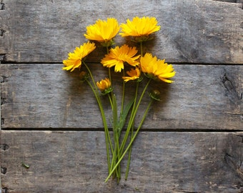 Lanceleaf Coreopsis, organic heirloom flower seeds, from our farmstead, eco friendly gardener gift, organic gardening, cottage garden