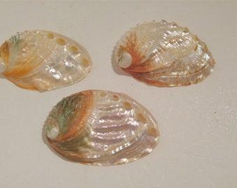 Abalone Seashells, Ocean Theme Wedding, Seaside Decor, Iridescent, Seashells, Beach Wedding, Bath Shells