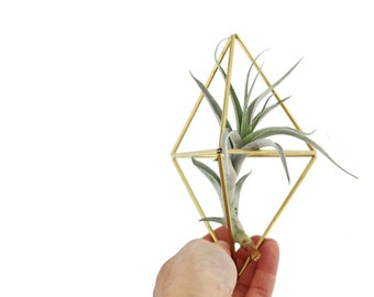 BACA - Modern Geometric Ornament - Himmeli - Air Plant Holder - Plant Hanger