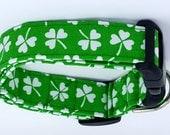 Simply Shamrocks St Patricks Day Irish Green and White Clovers Dog Collar