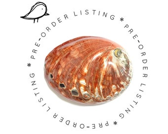 PRE-ORDER - Large Red Paua Shell Minaudiere / Evening Bag