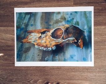 memory 02 // Doe Deer Skull Photograph Poster // 18 x 24 in. Glossy // Painted Skull Photography