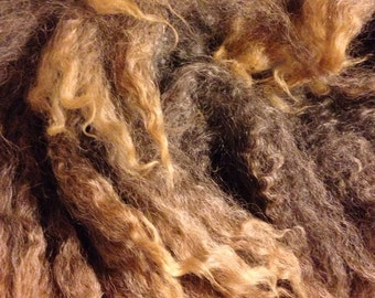 "Wenslyndale x BFL cross raw wool locks 4 to 4-1/2"" inches brown and tan locks"