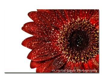 Botanical Art Decor, Crimson Red Photography, Gerber Daisy, Flower Fine Art Photography, Home Decor Print, Gift for Neighbour, Unframed