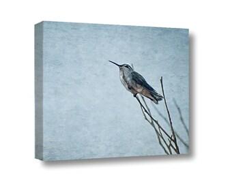 Small Canvas Wall Art Decor Resting Hummingbird