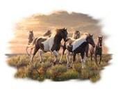 Group of Paint Horses Womans T Shirt 17764HL2