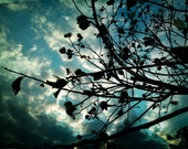 Buds and Branches professional Giclee photo art print photograph sky landscape