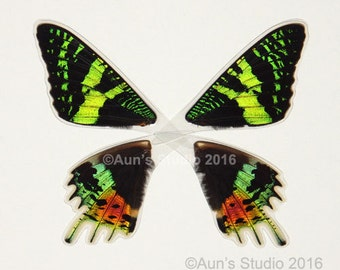 Real Laminated Moth Wings - Ready to use - Sunset Moth