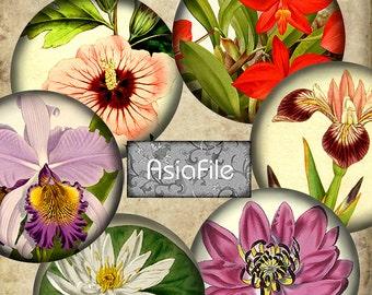 Digital Printable  Hawaiian Tropical Flowers, 1 Inch Circles AND 1.25 Inch Circles -  Hawaiian, Printable Images, Vintage Flowers,  CS 395