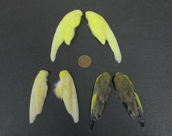 3 Pairs of Dried Birds Wings Feathers Art Craft Taxidermy Yellow Colours