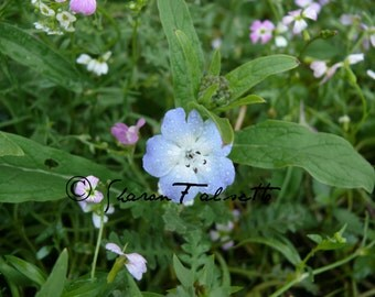 Series of Three Digital Photos: Wildflowers in the Garden by Sharon Falsetto
