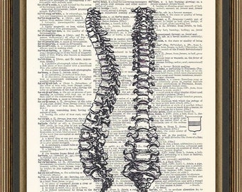 Skeleton spine illustration printed on a vintage dictionary page. Chiropractor Art, Human Anatomy Print, Doctor Gift, Nurse Graduation Gift.