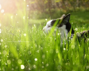 Cat, Cat Print, Cat Photography, Green, Summer, Spring