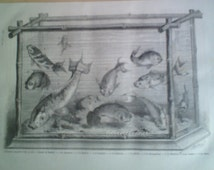 Antique Engraving of Japanese Aquarium, Japanese Fish,Japan  1866