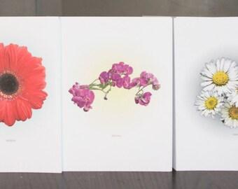Ten  'London Flowers' Note Cards