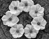 Dogwood Flower Circle Fine Art Photography Print - Wall Art - Nature Print - Home Decor
