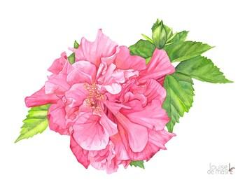 Hibiscus watercolour painting print, A4 size. H10616. Hibiscus painting. Hibiscus print. Botanical wall art. Botanical print.
