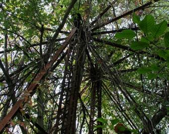 Abandoned Ferris Wheel in Woods of Ohio