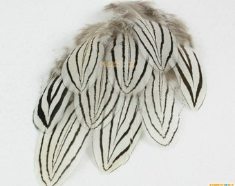 20 Pieces White Feather 5-7cm (YM233)