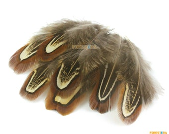50 Pieces Brown  Feather 4-8cm (YM24)