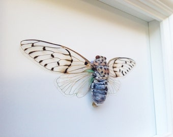 Real Framed Insect Taxidermy - Insects, Office Decoration, Bugs, Curiosity, Cicada, Taxidermy art, Natural, Unique, Gift, Special Occasion