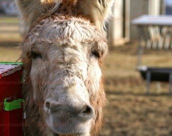 Donkey making funny faces 5x7 photo greeting card you choose picture 1, 2 or 3 blank inside