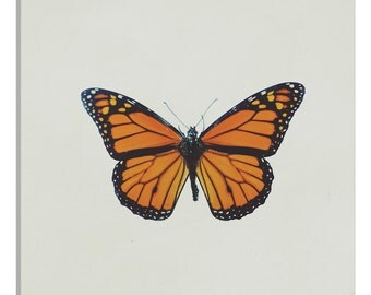 iCanvas Butterfly Gallery Wrapped Canvas Art Print by Chelsea Victoria