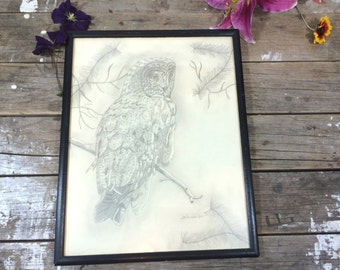 Vintage Owl Pencil Drawing, art, art work, framed with glass, signed