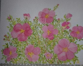 Apple Rose watercolor greeting card