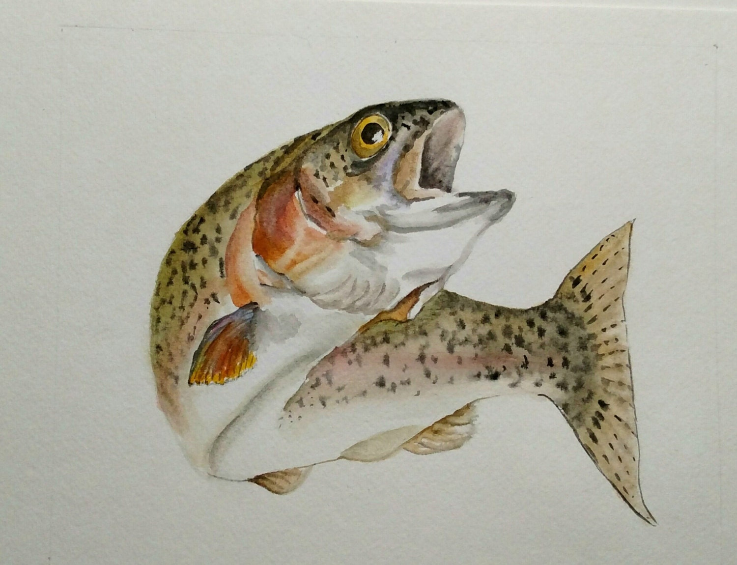 Rainbow Trout Watercolor Painting Trout Wall Art Original