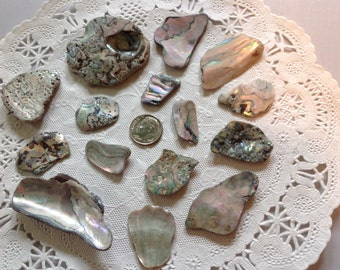 Abalone Shell Pieces Beautifully shaped Mendocino Coast