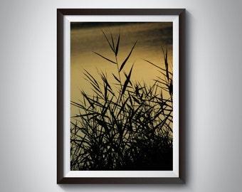 Zen Decor Art Photograph in Black & Neutral Golden