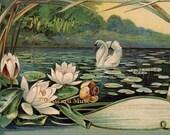 Art Nouveau Swan - New 4x6 Vintage Image Photo Print - FN008