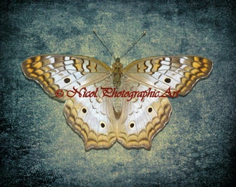 Butterfly Photograph Delicate Simple Butterfly Matted Picture Art Print A495