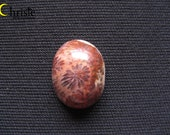 Brown Fossil Coral Oval Cabochon 13.5x17.5x6.5mm