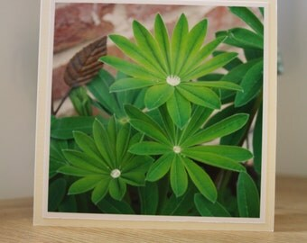 Lupin Leaves Greeting Card