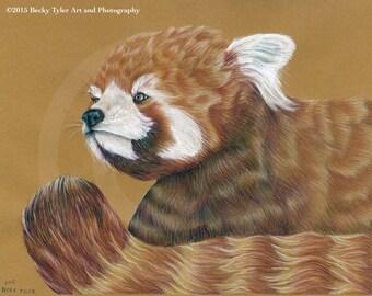 Red Panda Original Drawing