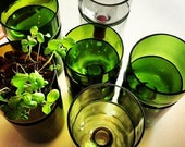 SALE TODAY ONLY Recycled Self Watering Jumbo Wine Bottle Planter Complete Kit - Grow Basil or Parsley