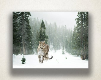 Snow Leopard Canvas Art, Animal Wall Art, Winter Canvas Print, Wild Animal Wall Art, Photograph, Canvas Print, Home Art, Wall Art Canvas