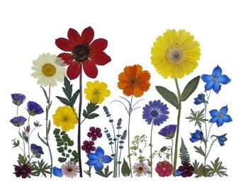 Set of 6 Pressed Flower Cards - August Garden - #027