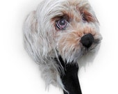 GOLF club  head cover ,Custom Dog portrait Maltese yorkie mix dog golf accessories ,golfer gift , Fathers day golf gift , GOLF GIFT