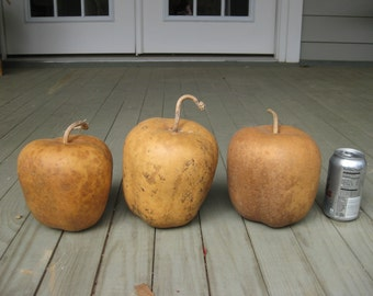 Lot of Three Apple Gourds Nice Clean And Ready For Crafts