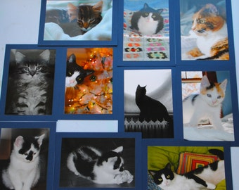 Cute Cat Card Set - Set of 10 Postcards - Cat Photos - Maine Cards