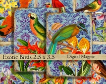 Exotic Birds ATC digital printable collage sheet gift tags jewelry holders background paper instant download graphics 2.5 x 3.5 inch