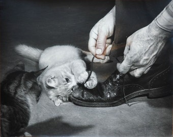 Kittens playing with shoelaces vintage art cat photo by M. Videtta