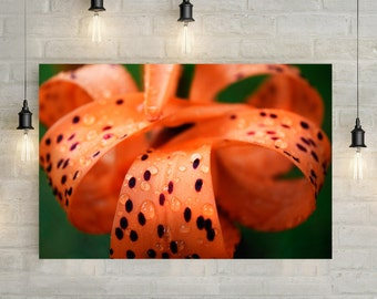 Orange Flower Canvas Art, wall art canvas, canvas print, nature art, nature photography, nature prints