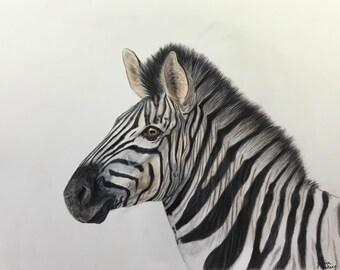 ORIGINAL colored pencil zebra