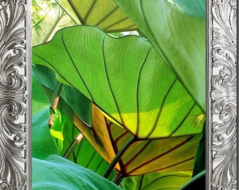 leaf fine art wall print photograph